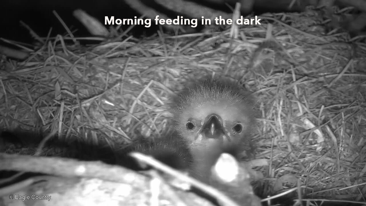 Morning Feeding In the Dark 3.10.19