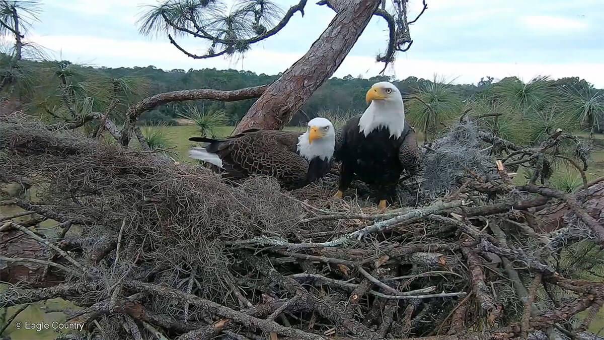 Eagle Country Victoria & Nicholas