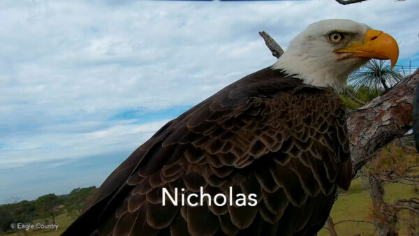 Eagle Country Nicholas Profile Pic