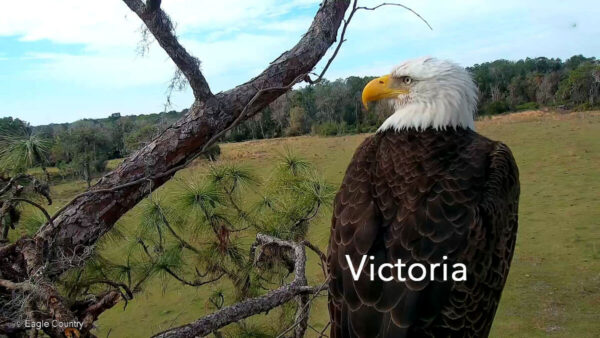 Eagle Country Victoria Profile Pic